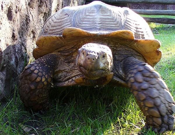 Les tortues. 1666f975