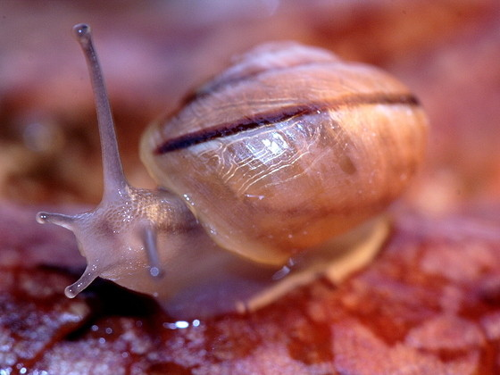 Les escargots 2dfca899