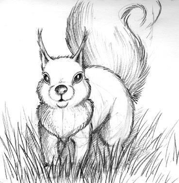 Comment dessiner un ecureuil manga - Comment colorier un manga ...