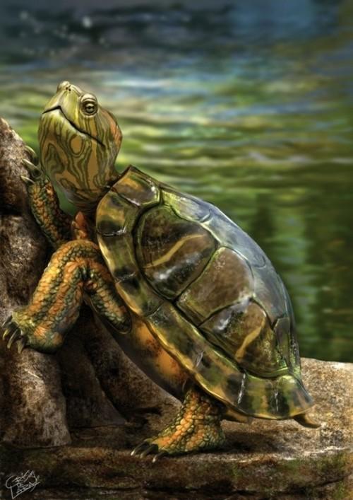 Les tortues. 9480e4a3