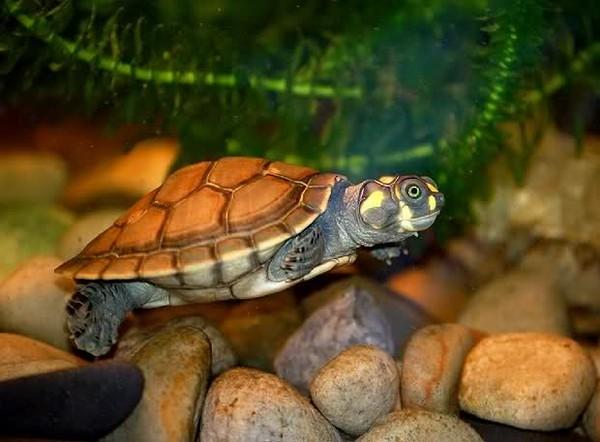 Les tortues. A076d094