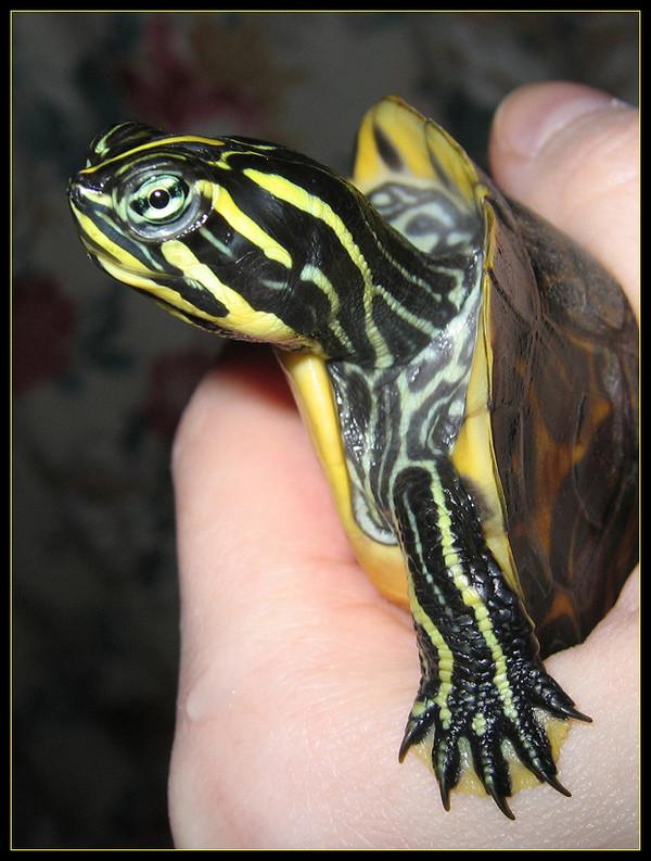 Les tortues. Ab8f1b8a