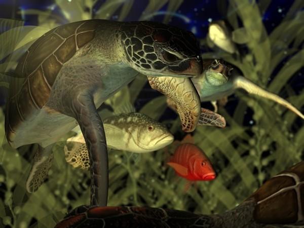 Les tortues. Bd8f42b8