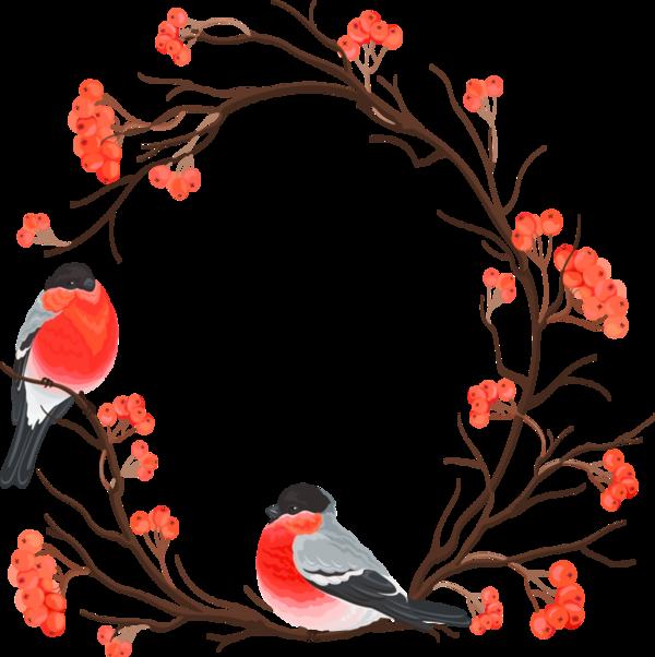Oiseaux Belle Oiseaux Divers Page 14