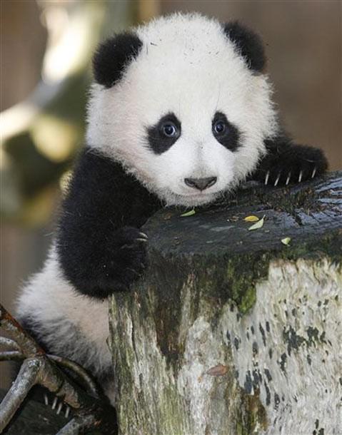Скачать кряк панда 2007, скачать кряк на программу photo artist.